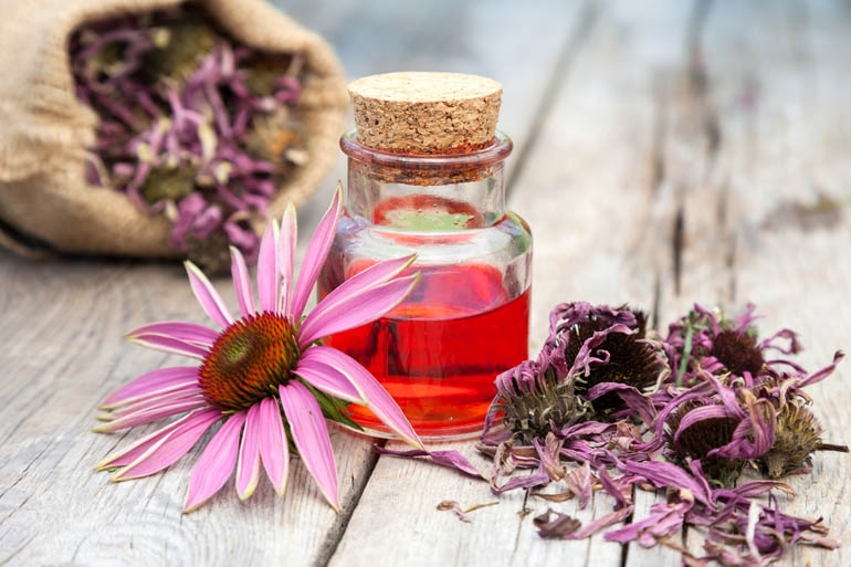 Plant Extract from Echinacea Officinalis