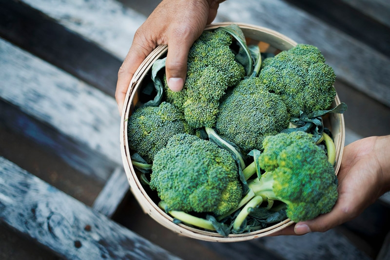 Hands holding a basket of broccoli- a cruciferous vegetable known to possess health-promoting properties of plant indoles