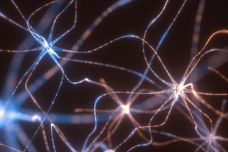 Neurotransmitters in the brain