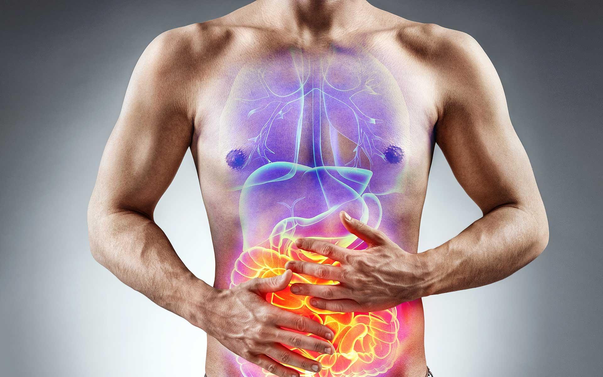 Digestive System Process